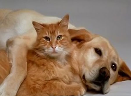 مشروع قانون لحماية حقوق الحيوانات في مصر