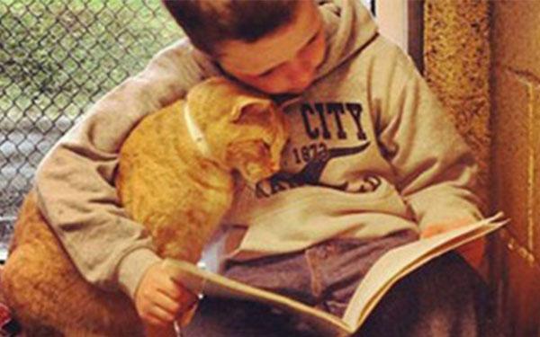 بالصور.. أطفال يقرؤون للقطط لتحسين مهاراتهم فى القراءة