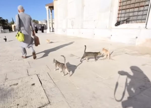 صديق القطط
