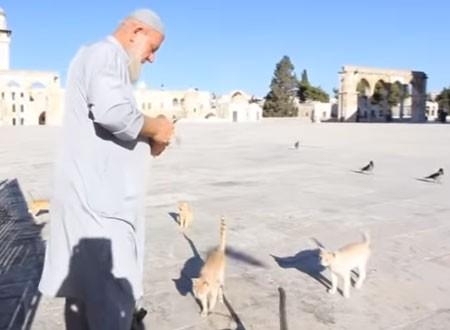 وجبات اللانشون جعلت الحاج غسان صديق القطط في المسجد الأقصى.. صور وفيديو