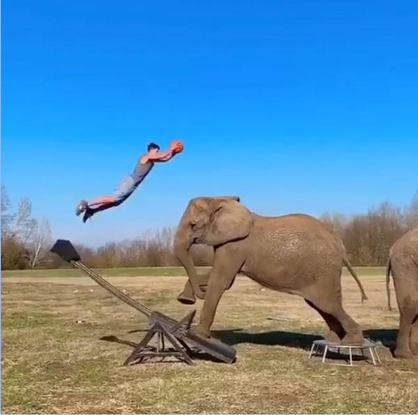 فيل يلعب كرة السلة