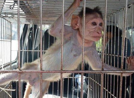 السجن المؤبد لقرد متهم بالقتل وإدمان الكحول